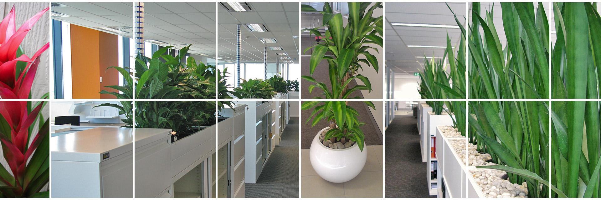 banner 1 - Plant Rental Brisbane - Trans-Plant