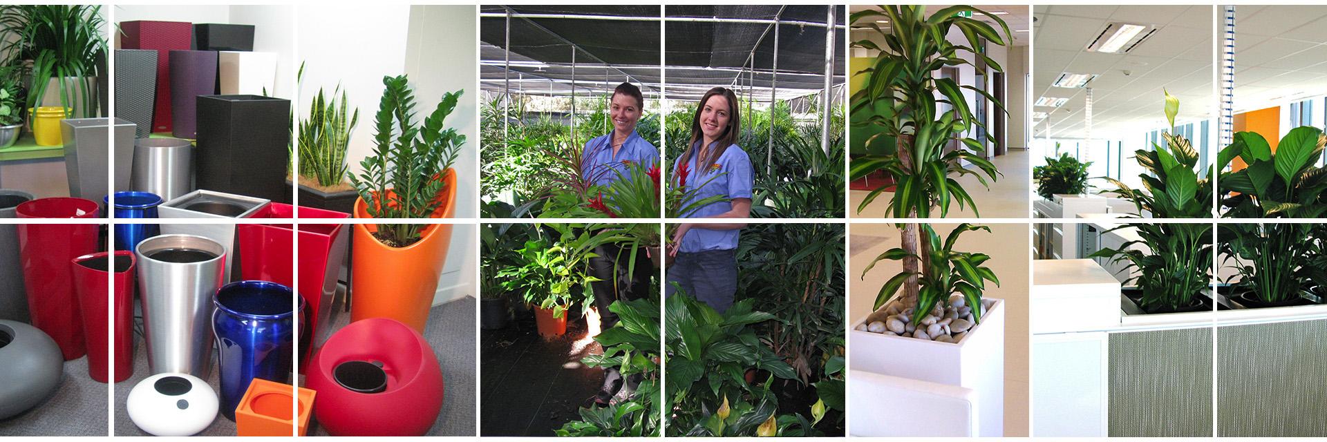 Banner - Plant Rental Brisbane - Trans-Plant