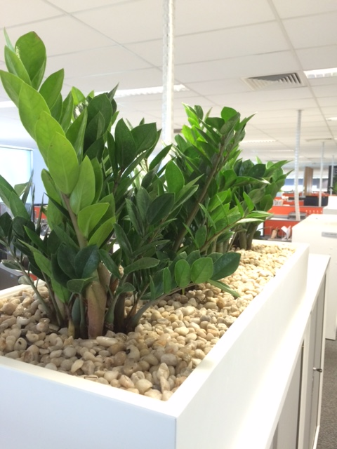 Indoor Plant Hire Brisbane - Trans-Plant
