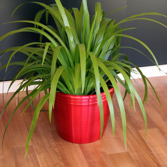 Benefits Of Having Real Indoor Plants In Your Home