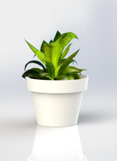 Vertical Garden Wall Pot