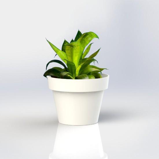 Vertical Garden Wall Pot