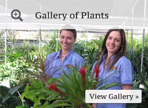 btn-plant-gallery